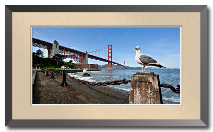 Seagull at the Golden Gate Bridge
