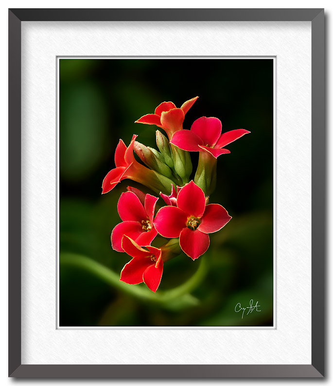 Fine art photo of small red flowers, photo by Craig Stocks
